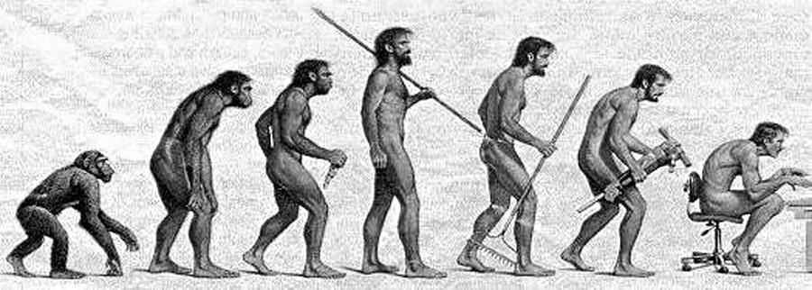 1_evolutie_onderrug